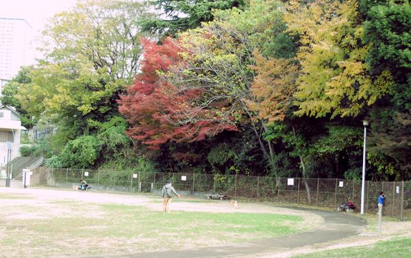 初音の森公園