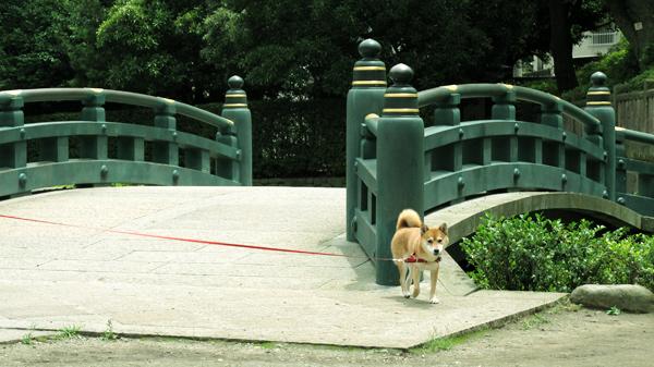 根津神社参り 橋