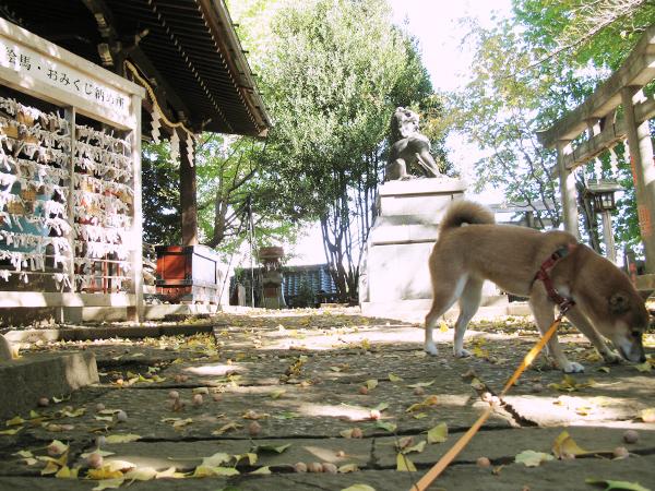 諏訪神社 谷根千 まめ