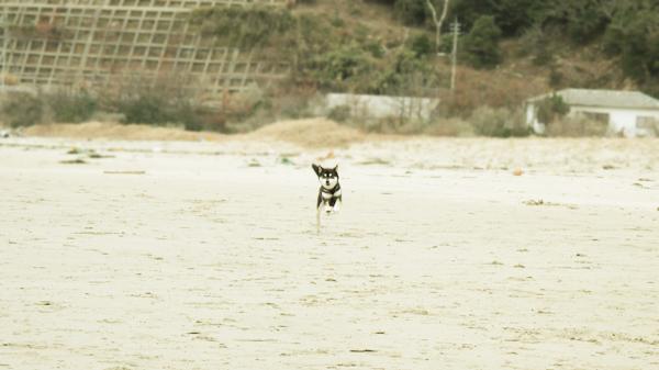 稲佐の浜 ゴロウ