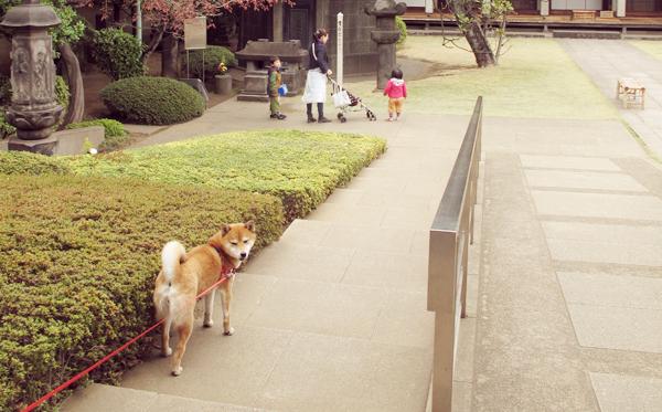 天王寺 谷中霊園入口