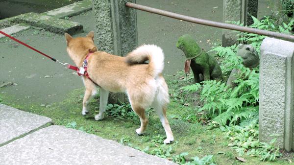 駒込稲荷 狐 まめ